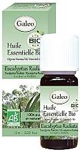 Parfums et Produits cosmétiques Huile essentielle bio d'eucalyptus radiata - Galeo Organic Essential Oil Eucalyptus Radiata